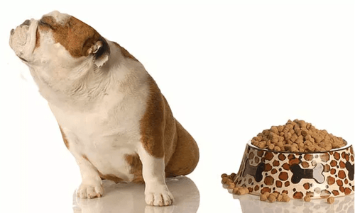 5 Ways to Control Your Pet's Fussy Eating in Summers - Curious Keeda