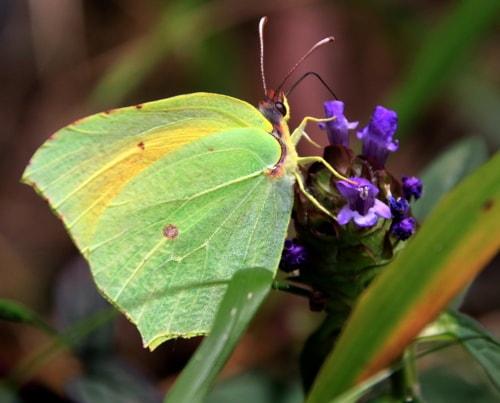 Wild colors via Gil Reis