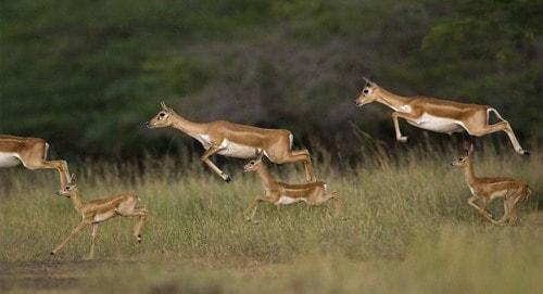 Wildlife Photography India                                                                          Wild World India offer wildlife ... via Wild World India