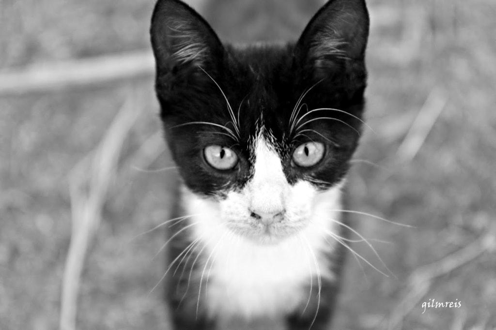 Cat via Gil Reis