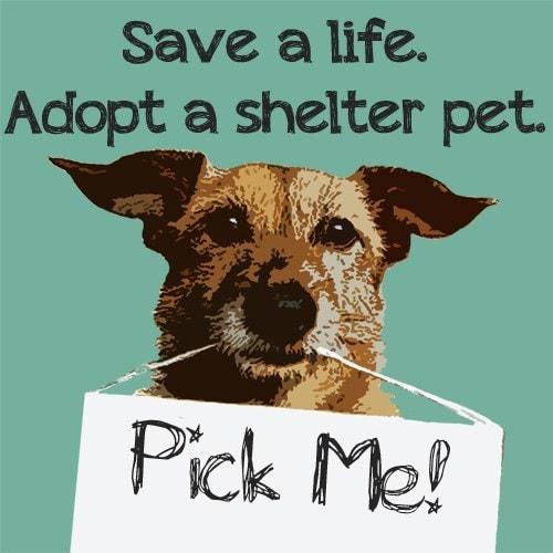 Pet Adoption Dubai via Petterr Pet Services