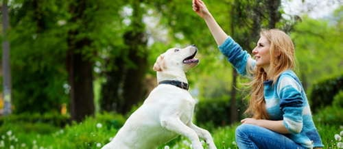Go for Online Vaccination Appointments in Dubai with Petterr via Petterr Pet Services