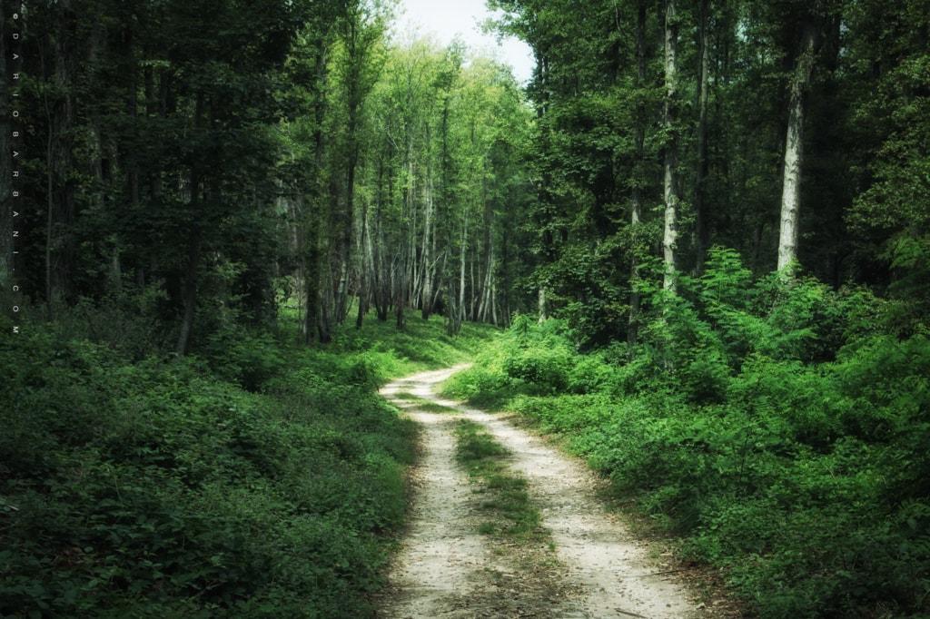 The Green via Dario Barbani