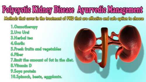 Polycystic Kidney Disease Treatment in Ayurveda   PKD Cyst