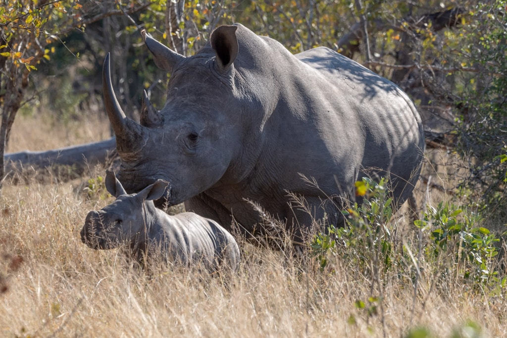 World Rhino Day 2019 via Stacy White