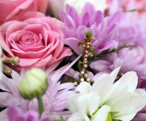 Florist Sydney via John Williams