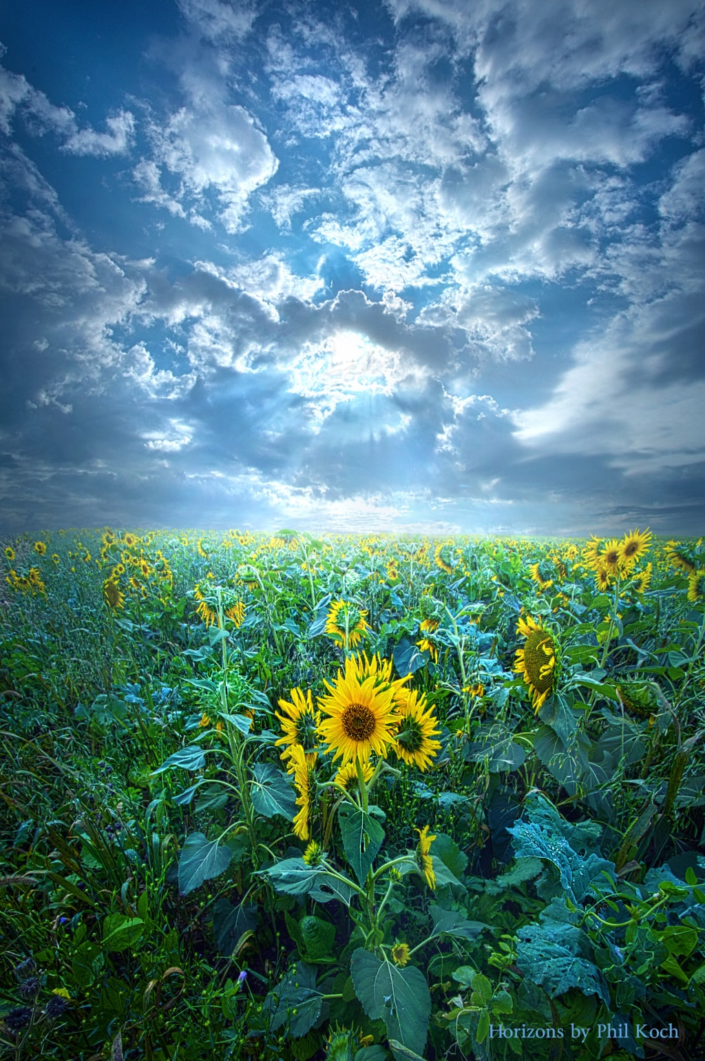 Horizons by Phil Koch, turning landscapes in to natural port... via Phil Koch