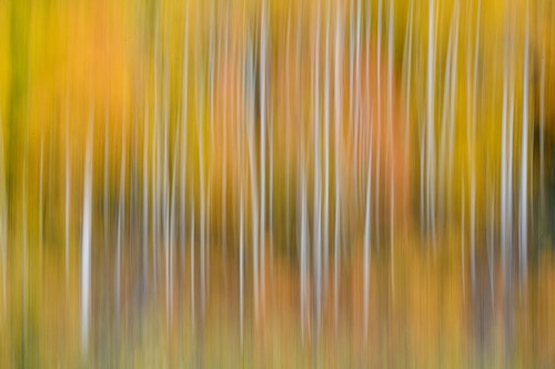 Abstract Aspens via Stacy White