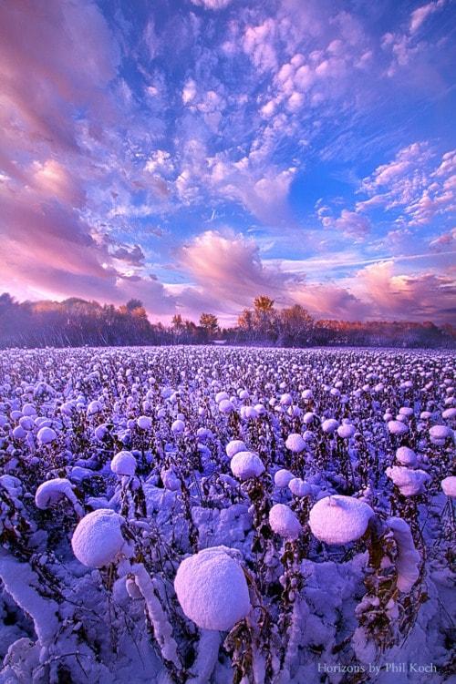 Snow Flowers via Phil Koch