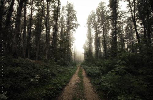 Green Road via Dario Barbani