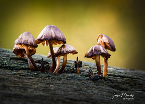 Autumn mushrooms via Joop Bruurs