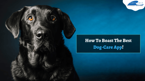 What Makes A Dog-Care App Like Rover Successful?