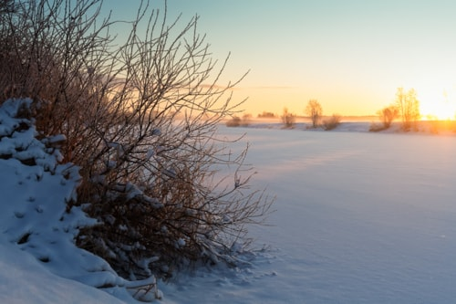 A bush is covered with snow and frost by a river at the Nort... via Jukka Heinovirta