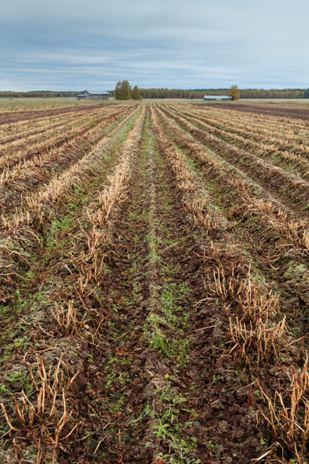 The plows of an autumn field lead to the old barn houses at ... via Jukka Heinovirta