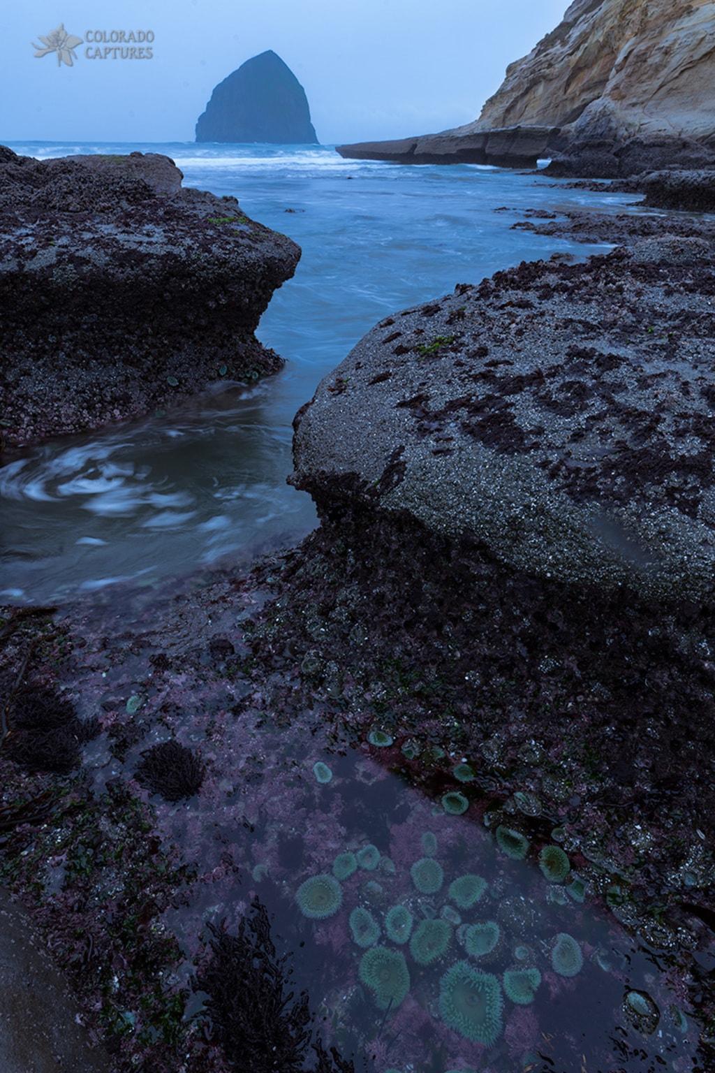 Tide Pool Flow via Mike Berenson