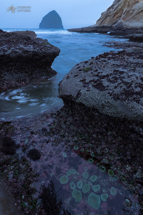 Tide Pool Flow via Mike Berenson
