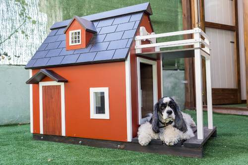 Best Indoor and Outdoor Dog House for Hot Weather - SmartOnlineLife
