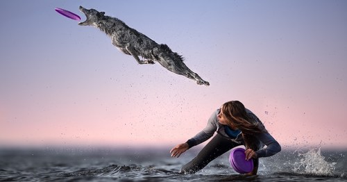 Gravity-Defying Photos of Determined Dogs Catching Frisbees in Mid-Air