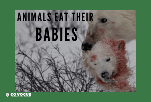 Why Do Some Animals Eat Their Babies? via Covogue