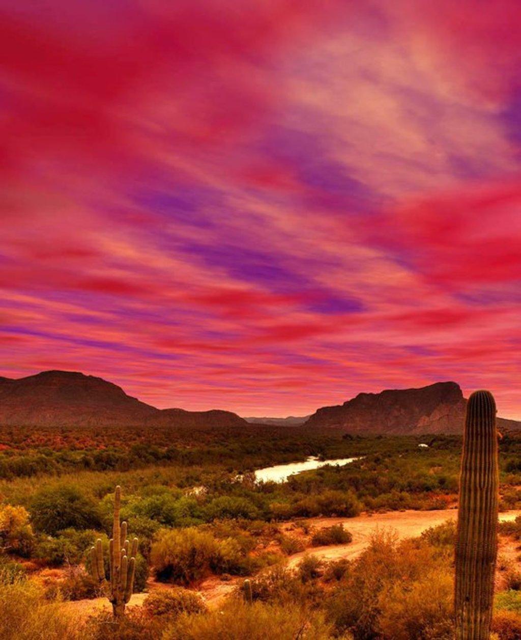 Arizona Cactus via Mike Bertelsen