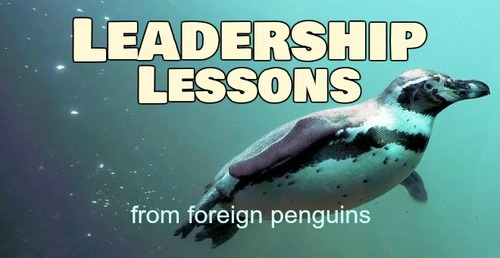 Leadership secrets from foreign penguins