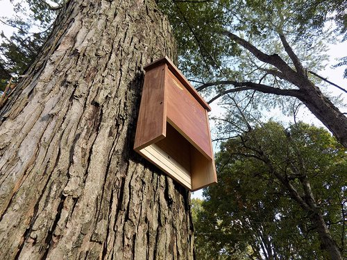 Do Bat House Really Work For Mosquito Control? - SmartOnlineLife