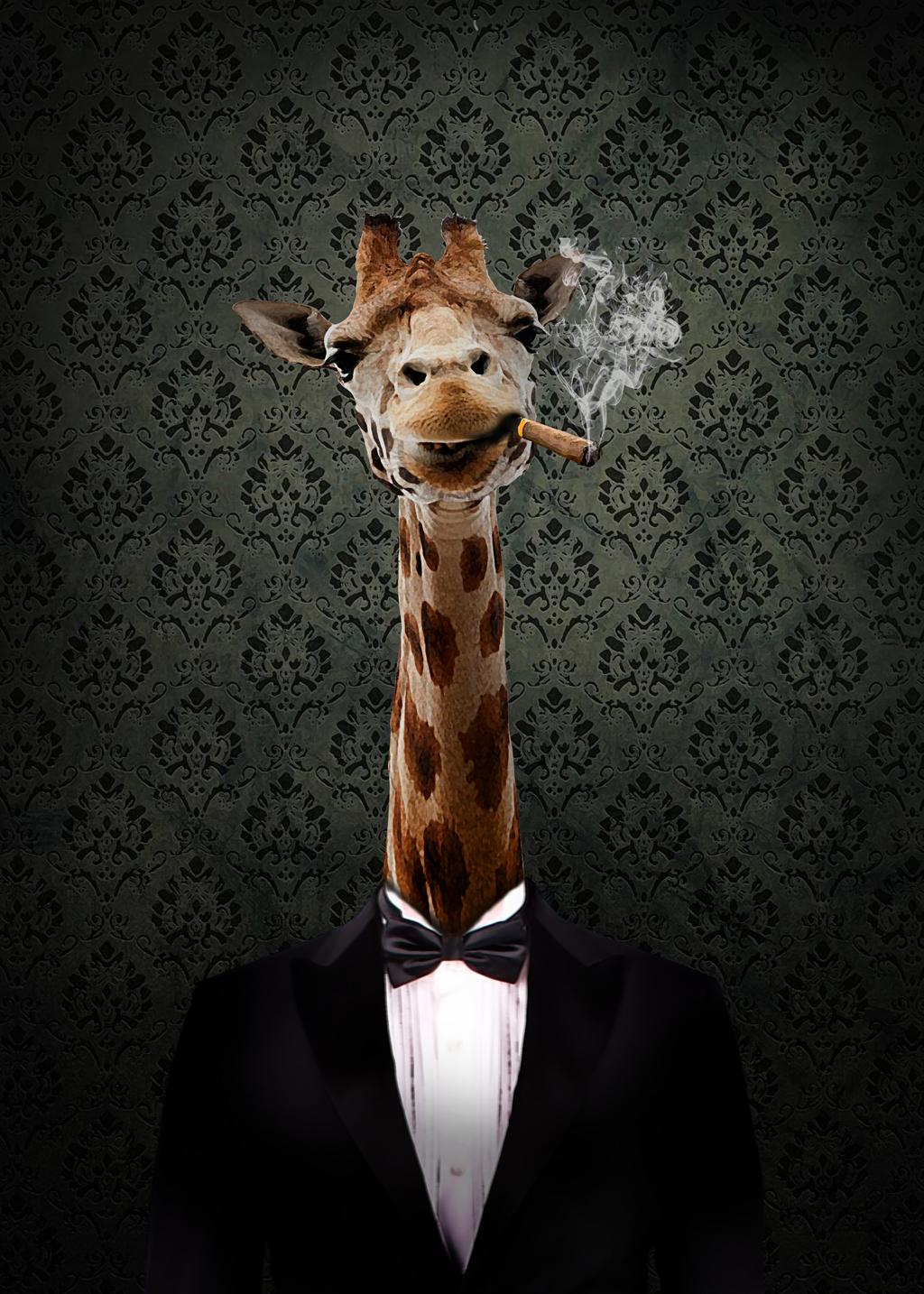 Animal Portrait 1 via Opel Mendoza
