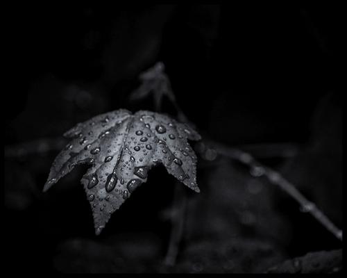Nature in B&W after the rain via Jon Davatz Photo