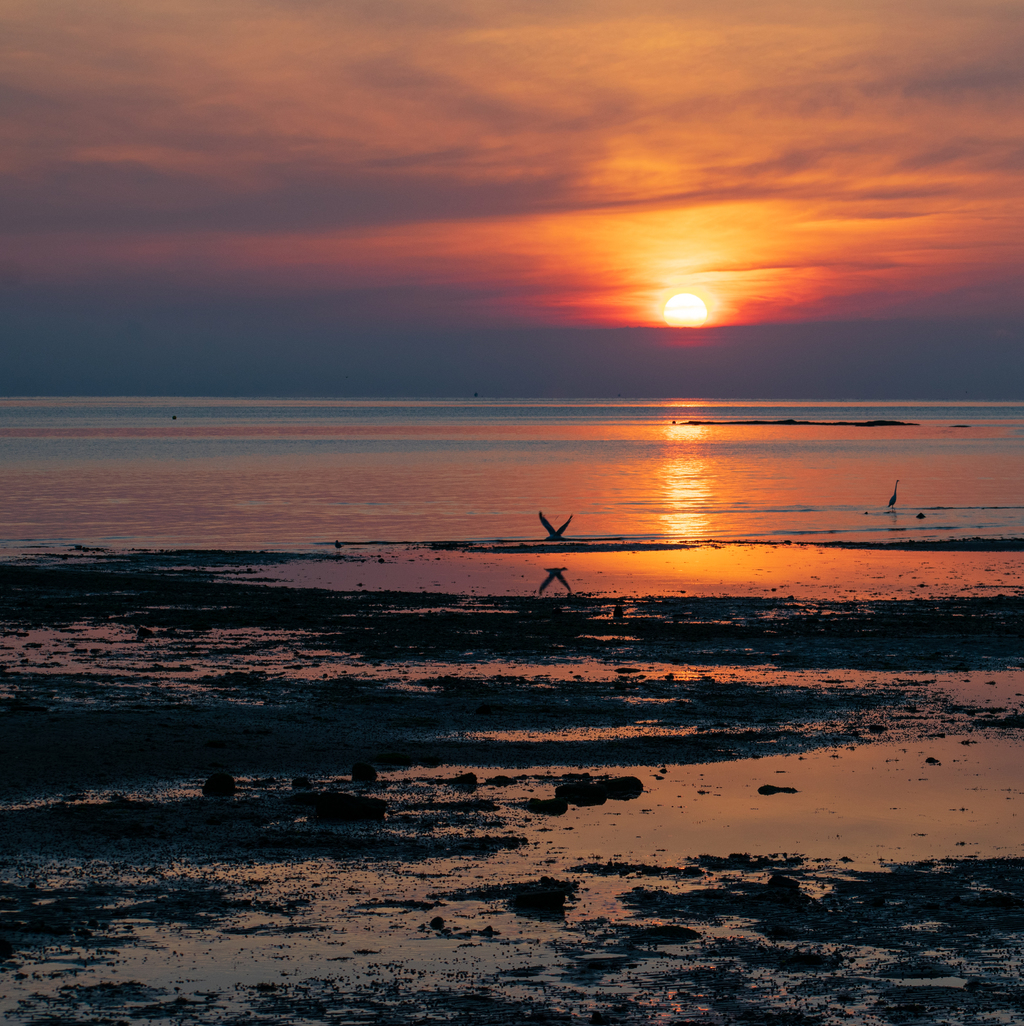Morning Low Tide via Steven Hughes