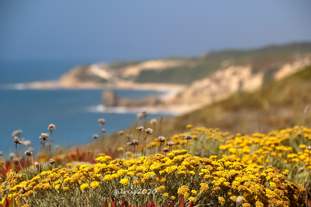 Yellows - western portuguese coast via Gil Reis