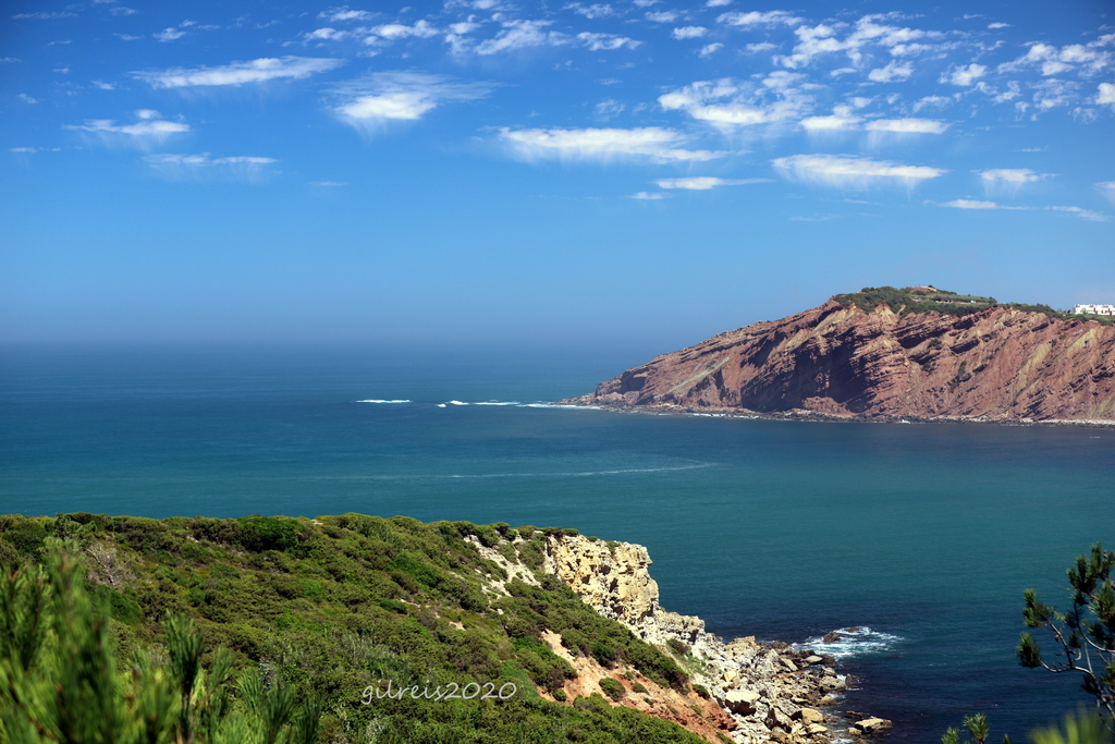 Blues from nmature - western portuguese coast via Gil Reis