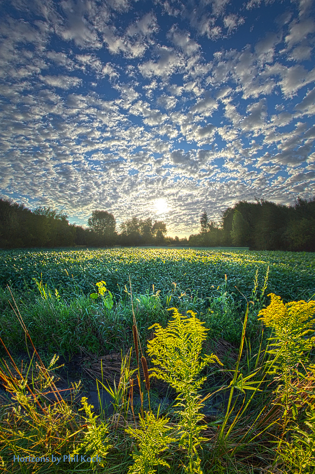 The Here and Now via Phil Koch