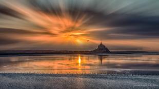 Sun bird via Jean Michel