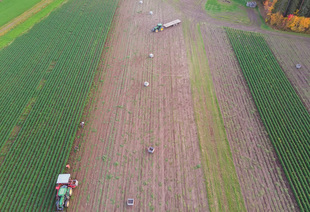 The farmers are harvesting the carrots on the autumn fields.... via Jukka Heinovirta