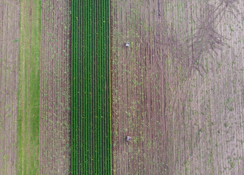Two wooden crates stand on the carrot fields. Most of the ca... via Jukka Heinovirta