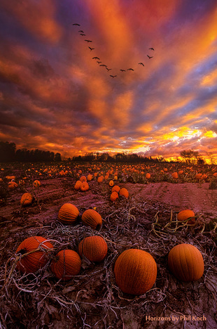 rural,fineart,arts,shadow,light,peace,wisconsin,endless,                                                      ear... via Phil Koch