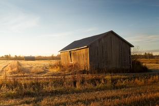 The old barn houses stand on the fields in the autumn sunris... via Jukka Heinovirta