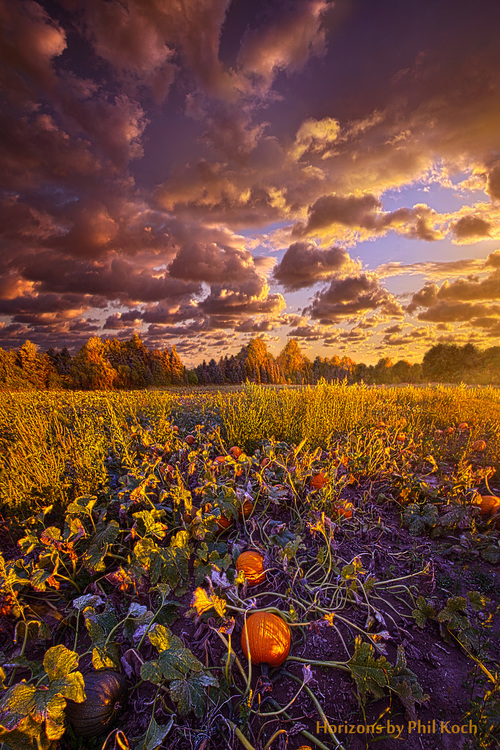 Wisconsin Horizons by Phil Koch.                                     Turning natural landscapes ... via Phil Koch