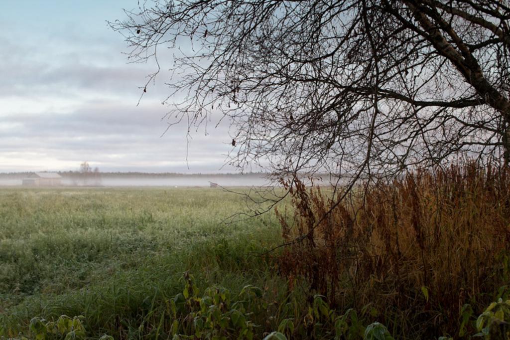 The mist covers the fields and the old barn houses on the au... via Jukka Heinovirta