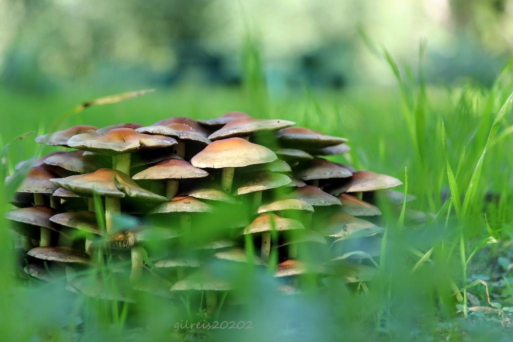 Natura via Gil Reis