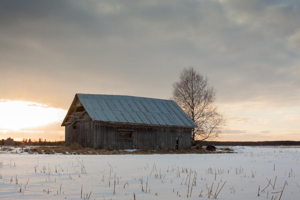 An old barn house and a bare birch tree bathe in the springt... via Jukka Heinovirta