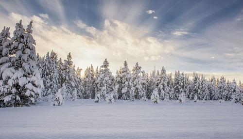 Winter Wonderland via Stacy White