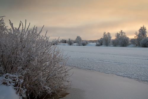The branches of a bush have been covered by frost on a cold ... via Jukka Heinovirta