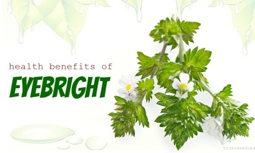 Top 7 Health Benefits Of Eyebright Herb And Its Uses