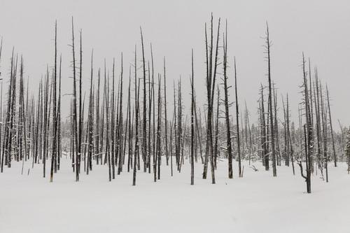 Winter in Yellowstone via Stacy White