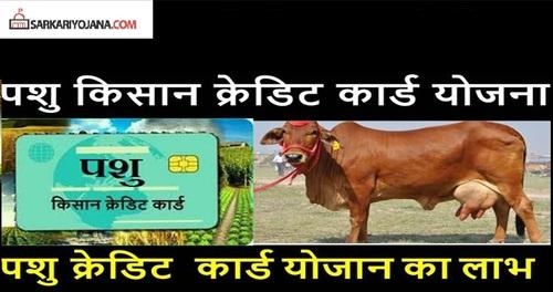 Haryana Pashu Kisan Credit Card Scheme via sarkariyojana list