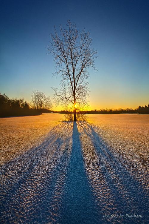 One Tree via Phil Koch