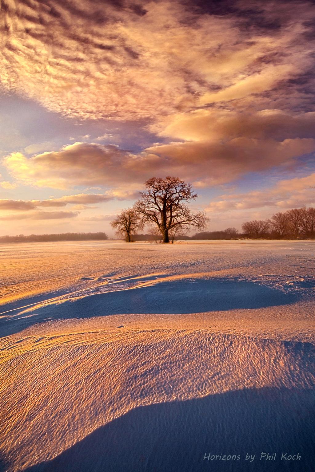 Two Trees via Phil Koch