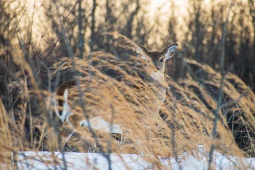 Oh Deer via Steven Hughes