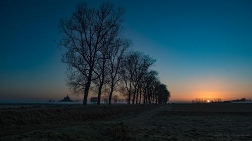 Sunrise on trees via Jean Michel